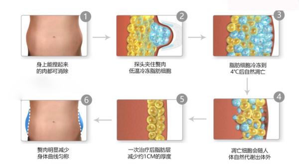 减掉脂肪的原理_柑橘多酚的脂肪分解机制   一、抑制儿茶酚-甲基转化酶cathecol-methyltransferase→cathecol-methyltransferase阻断脂肪分解荷尔蒙(如:肾上腺素、正肾